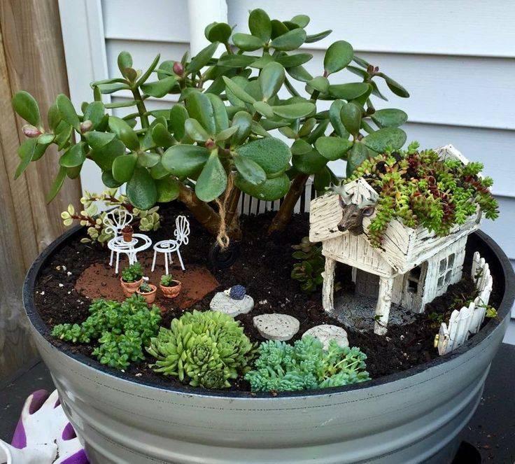 Мини-сад (42 фото): выбор контейнера, растений и декора. минисад в горшке своими руками. увлечение и заработок