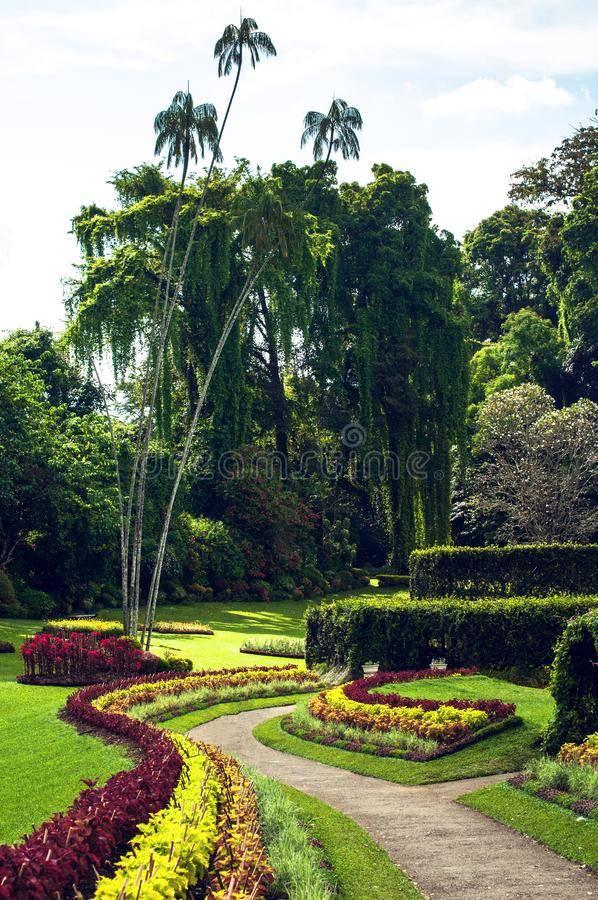 Королевский ботанический сад, шри ланка. отели рядом, фото, видео, как добраться — туристер.ру