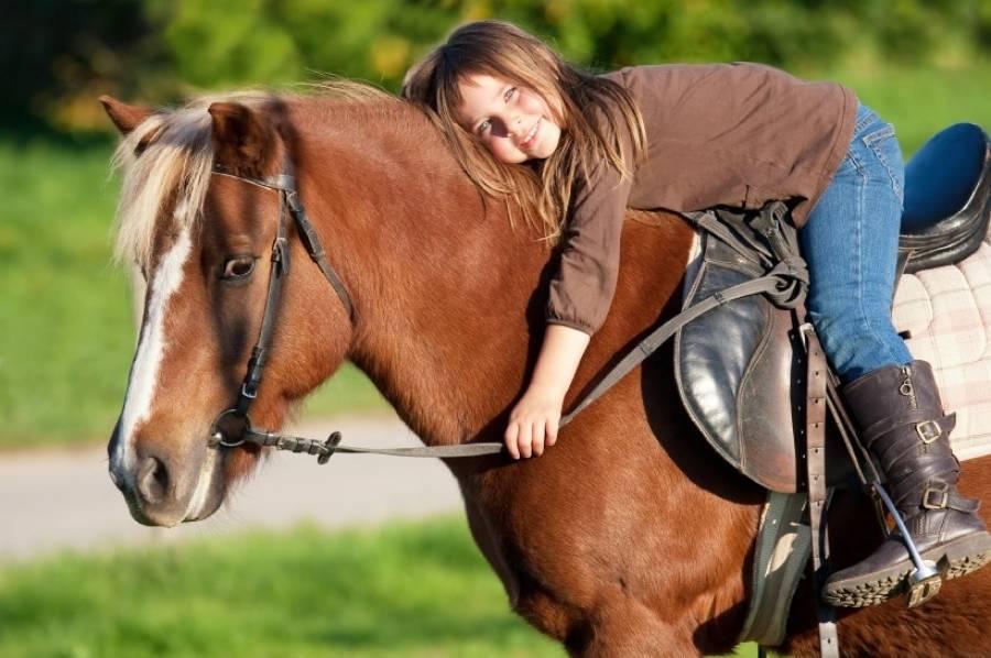 Как ухаживать за лошадью, содержание в домашних условиях для новичка - твоя любимая ферма