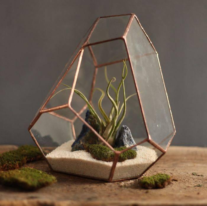 Флорариум своими руками: пошаговая инструкция для начинающих + выбор емкости и растений, варианты и фото композиций