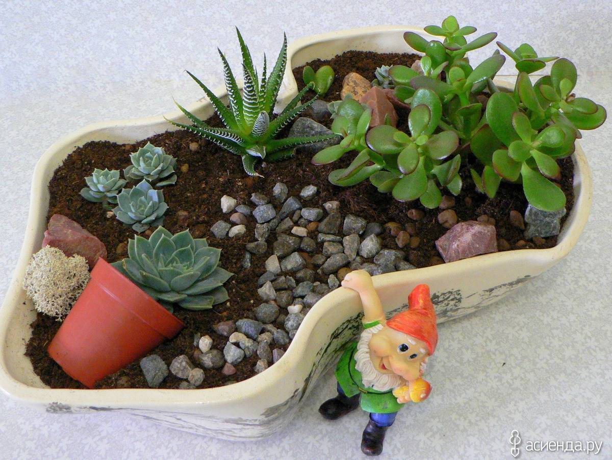 Создание мини-садов своими руками в горшках – хобби для квартирных дачников