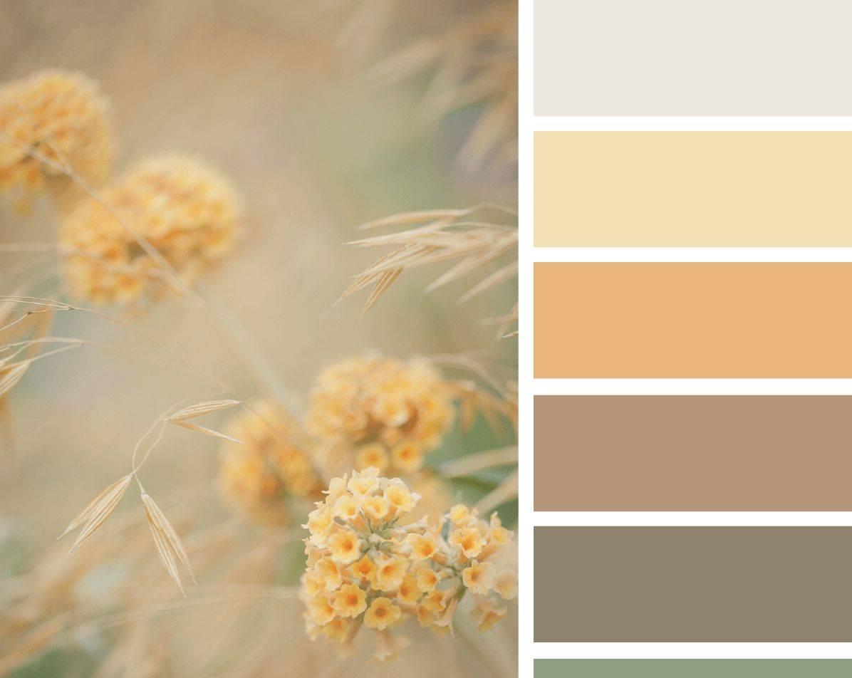 Сочетание цветов и цветовой круг (гармоничные цвета)