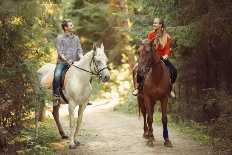 Как ухаживать за лошадью в домашних условиях для начинающих, способы и правила