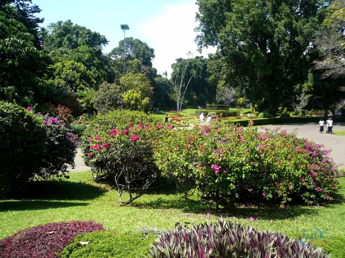 Королевский ботанический сад в перадении – история и достопримечательности