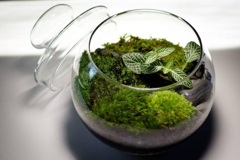 Как вырастить мох сфагнум в домашних условиях?