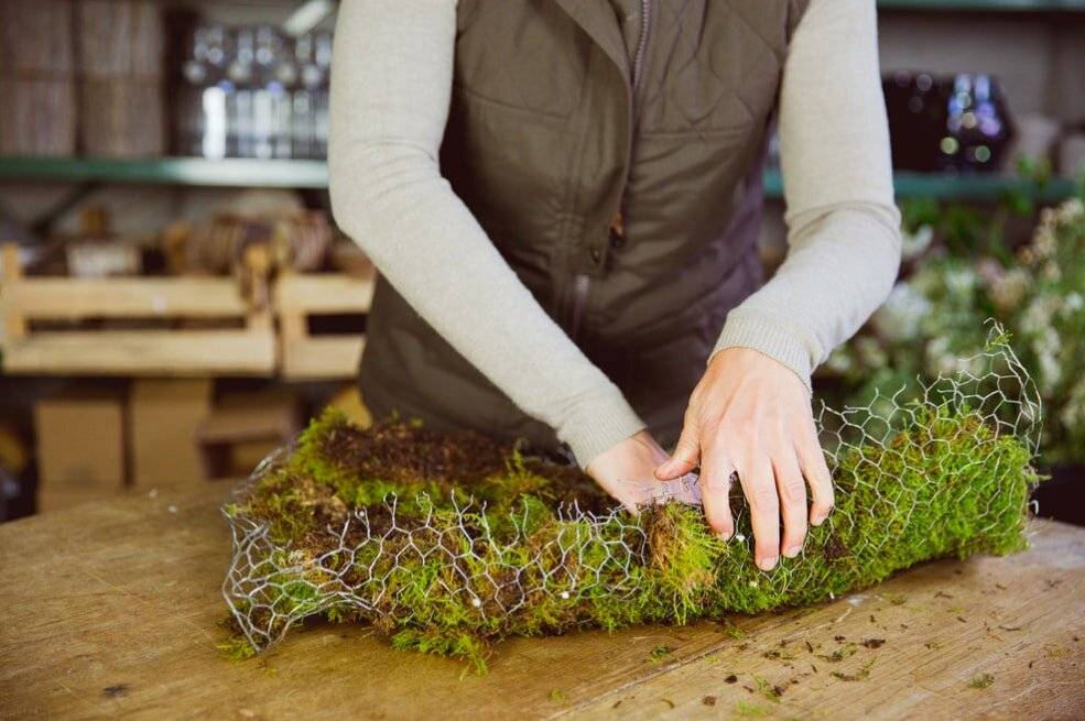 Выращиваем мох в домашних условиях — создание ландшафта