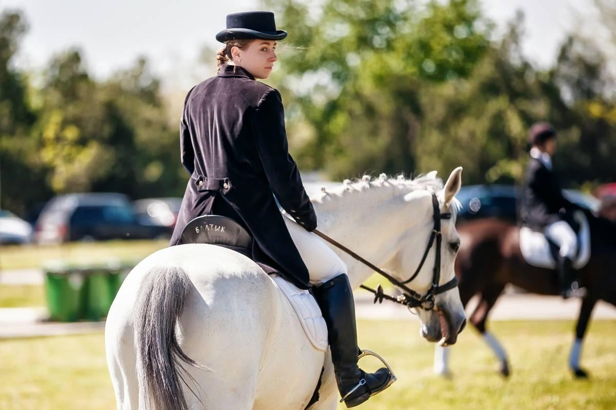 Польза и вред верховой езды на лошадях, видео уроки, экипировка | zaslonovgrad.ru