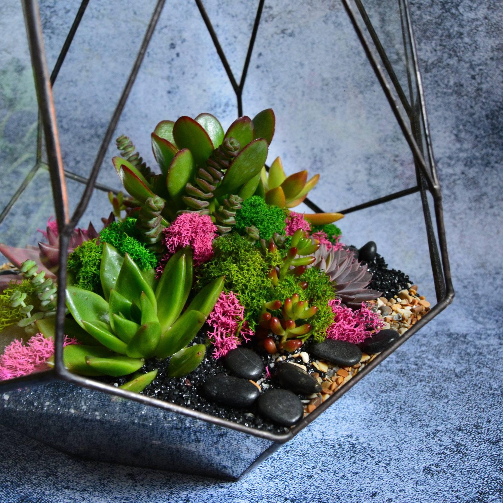 Флорариум для кактусов и суккулентов как хобби и увлечение