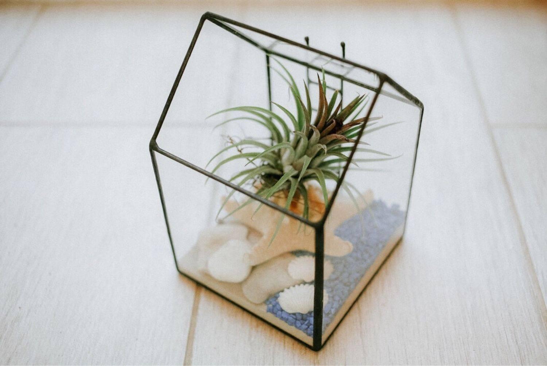 Флорариум для начинающих: как его сделать и какие выбрать растения?