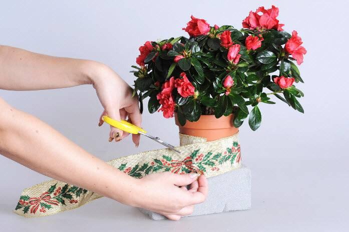 Как ухаживать за ёлкой в горшке? — ботаничка.ru