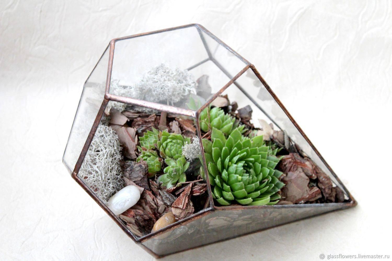 5 причин, почему флорариум — это идеальный подарок | brodude.ru