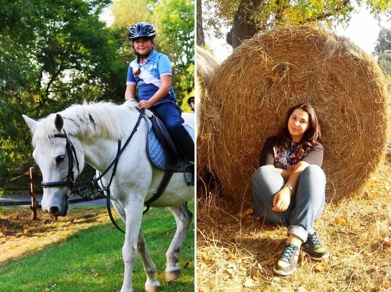 Разведение лошадей — как ухаживать за поголовьем