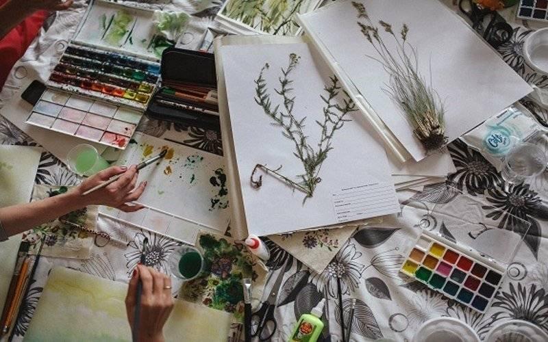 Гербарий: виды, особенности сбора растений и варианты оформления