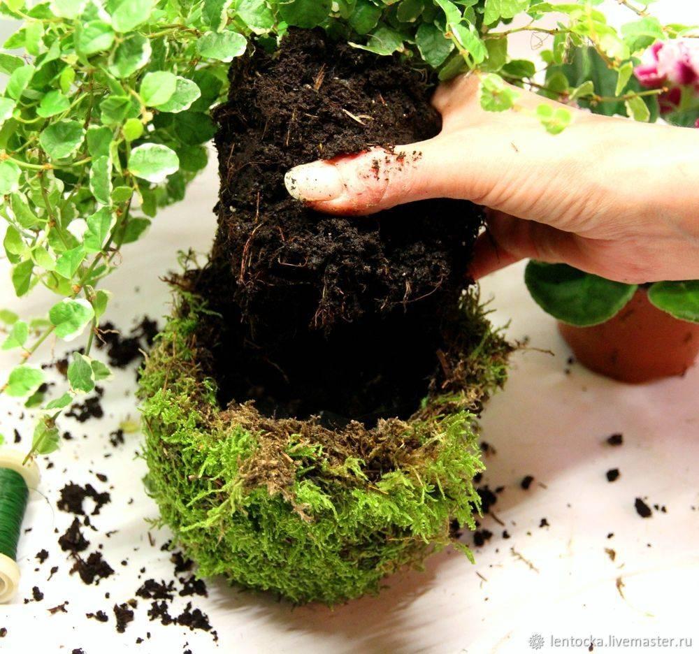 Выращивание мха в домашних условиях на стене - вместе мастерим
