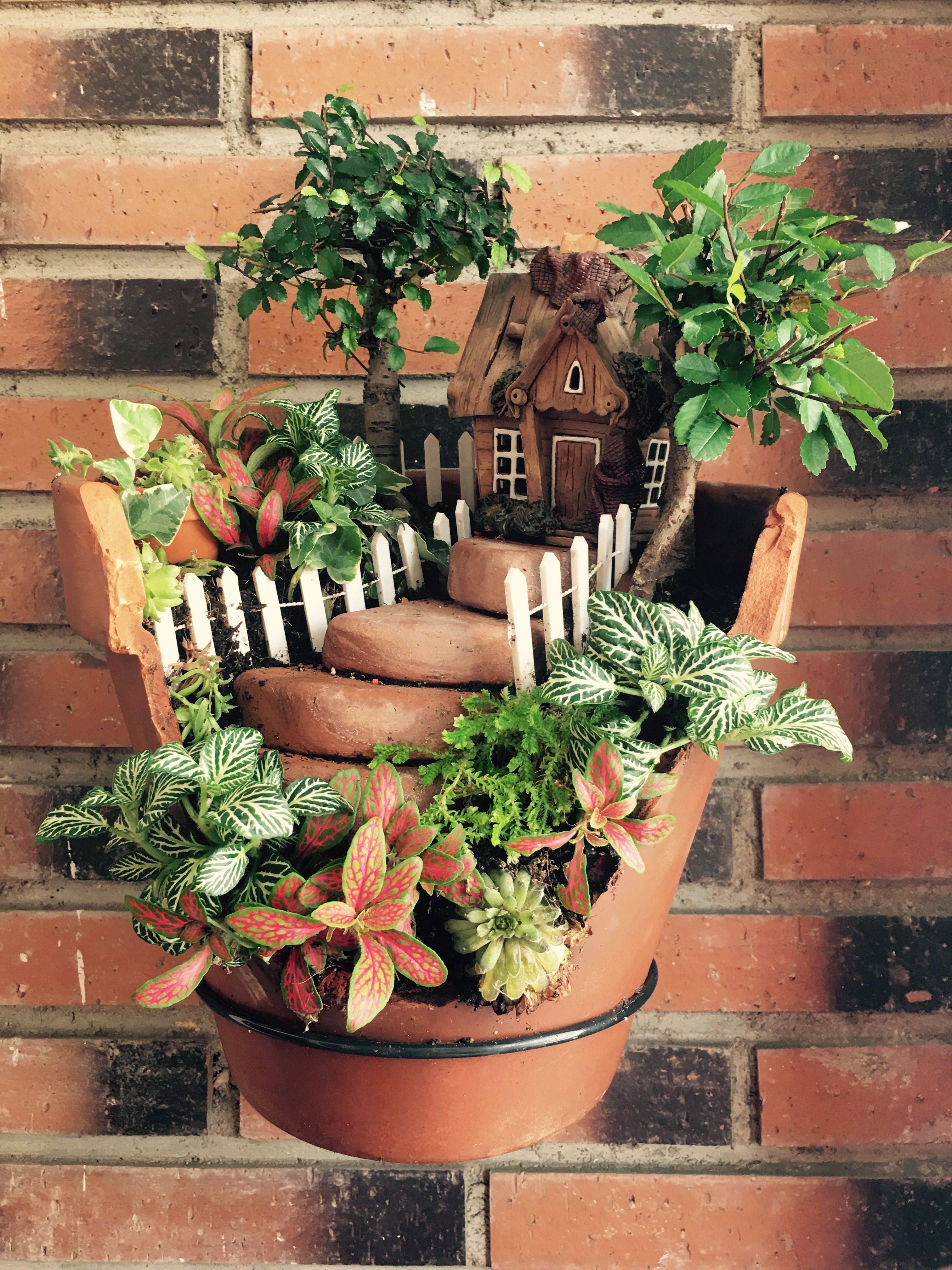 10 лучших комнатных растений для начинающих. уход в домашних условиях. фото — ботаничка.ru