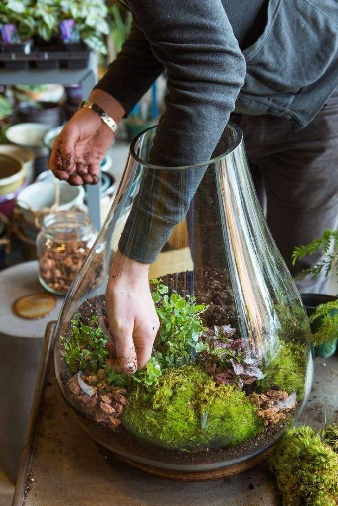 Как вырастить мох в домашних условиях и на даче? рекомендации и видео на ydoo.info