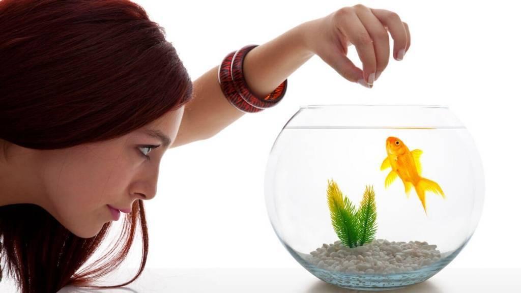 25 идей для хобби, на которых можно еще и заработать