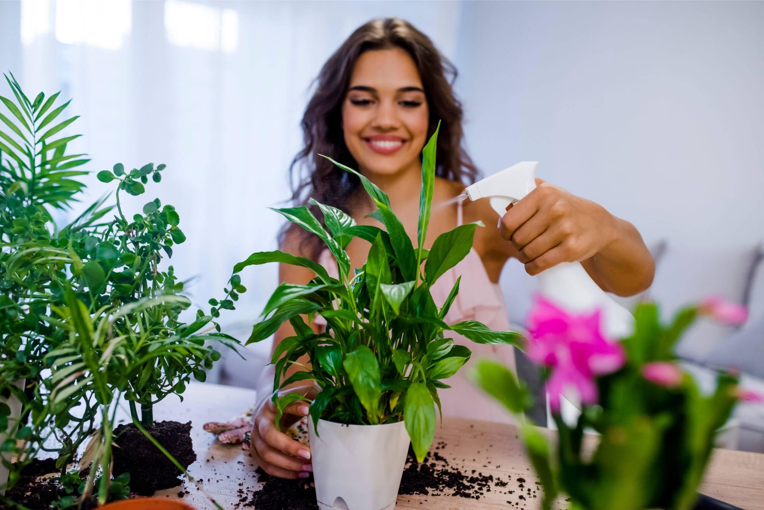 Как правильно вырастить и размножить ель дома в горшке