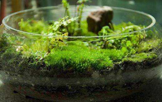 Как вырастить мох в домашних условиях, фото и видео