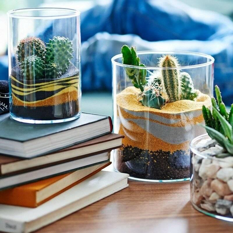 Флорариум из кактусов своими руками: пошаговая инструкция