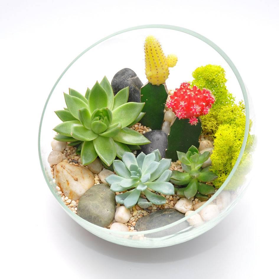 Составление композиции из суккулентов и кактусов. фото-примеры
