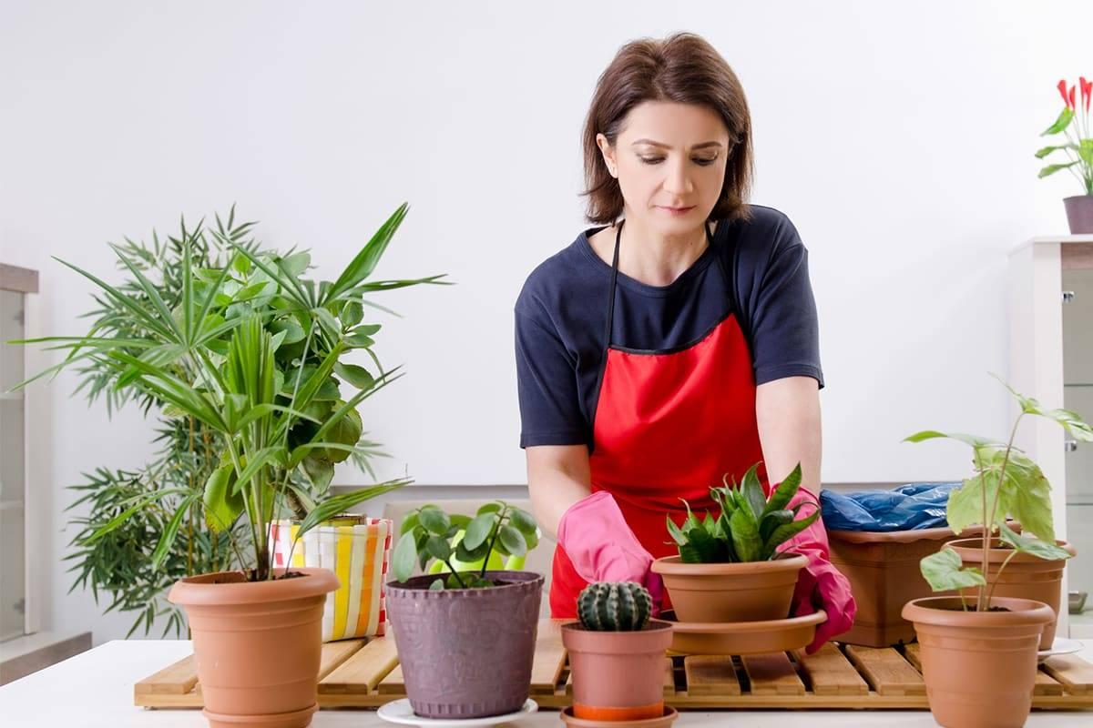 Хобби для стильных девчонок — комнатное цветоводство, советы