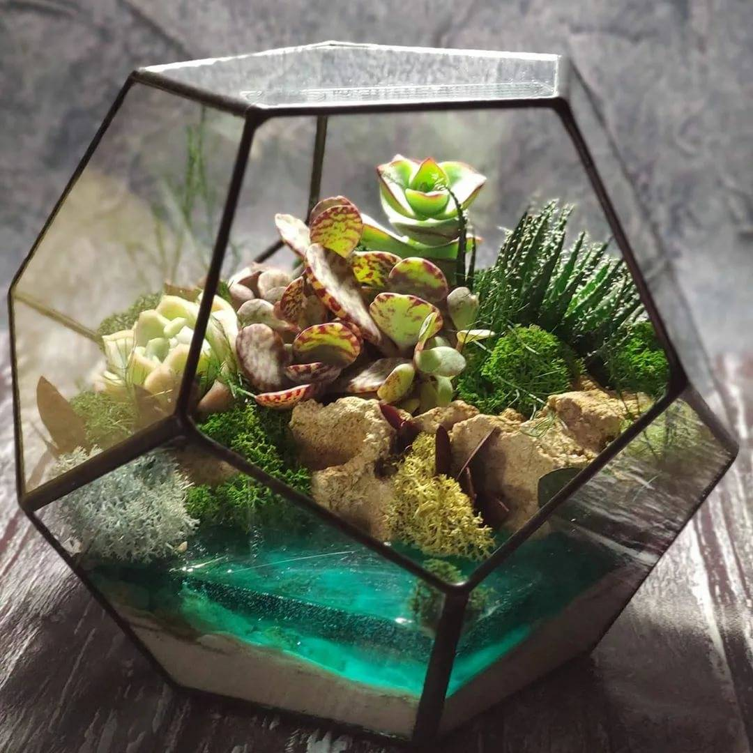 Делаем флорариум своими руками: пошаговая инструкция для начинающих флористов