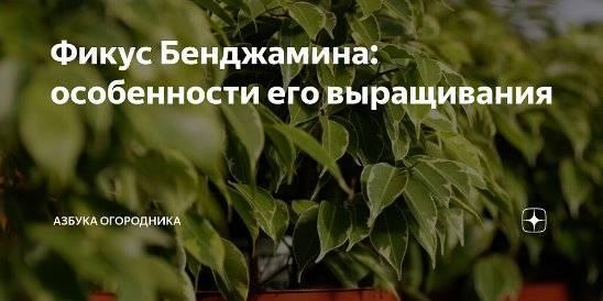 Гендер для чайников — краткий курс | colta.ru