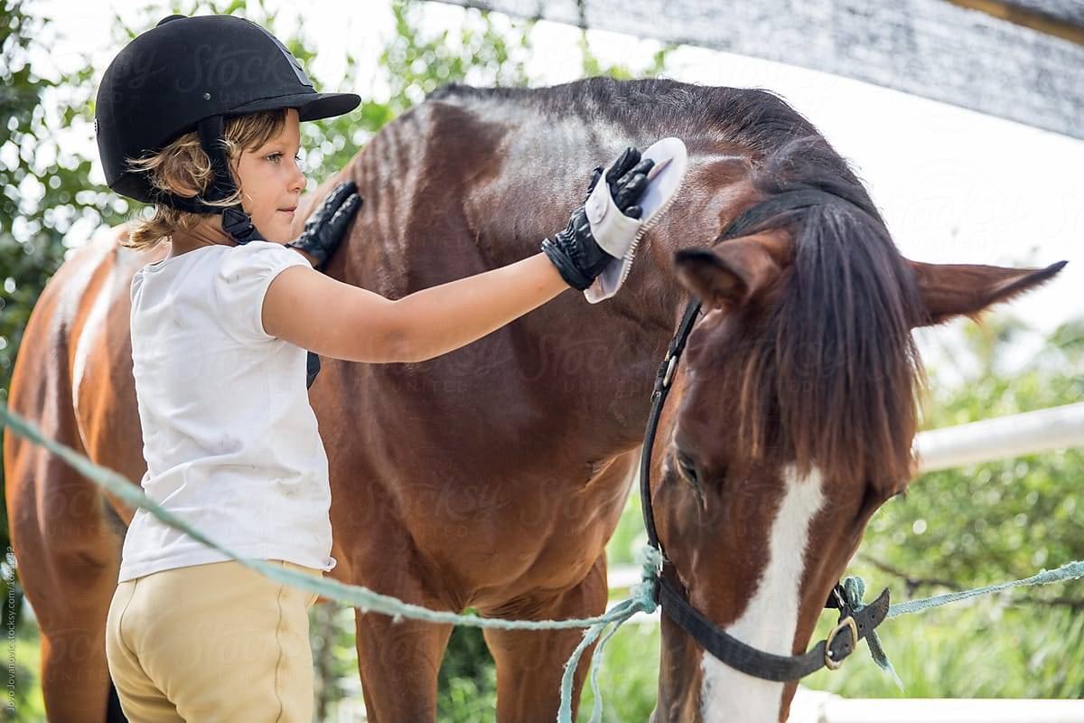 Уход за лошадьми как хобби и увлечение