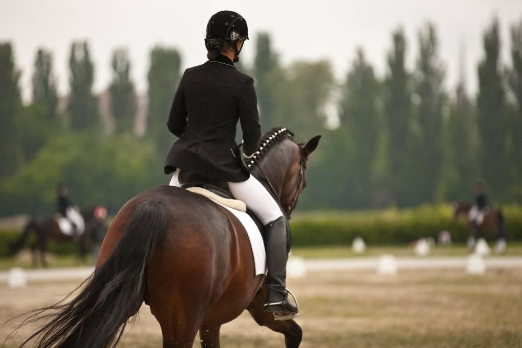 Катание на лошадях (39 фото): обучение верховой езде, польза и вред конной прогулки для детей. как кататься на санях, запряженных конями?