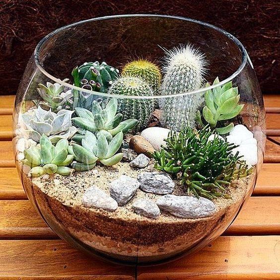 Выбираем растения для мини-садика в горшке