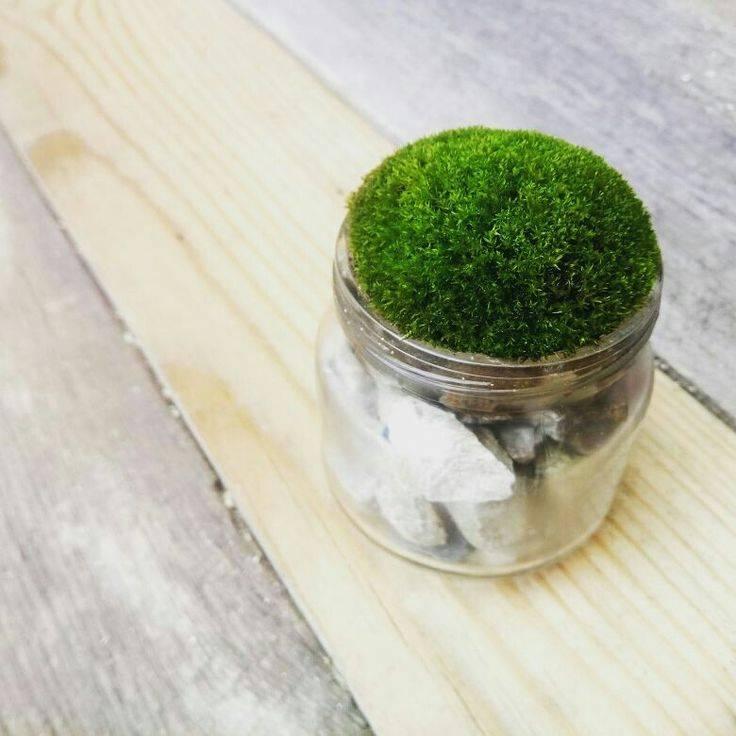 Как вырастить мох в домашних условиях: посадка, уход