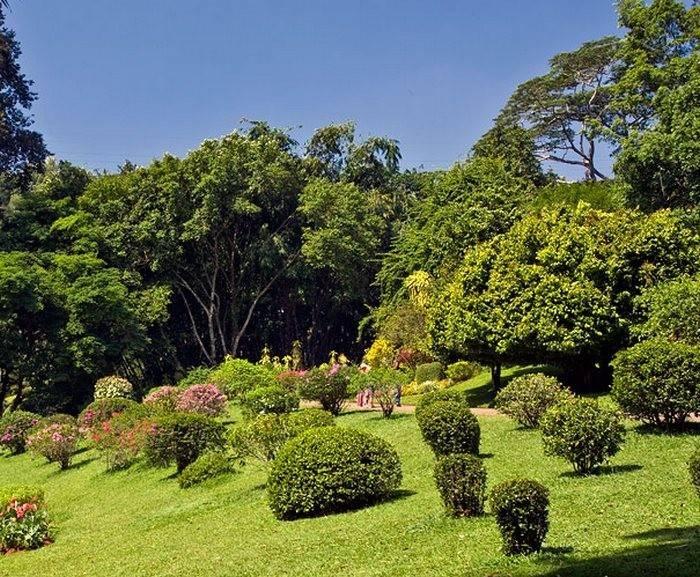 Королевский ботанический сад (шри-ланка): описание, как доехать, отзывы