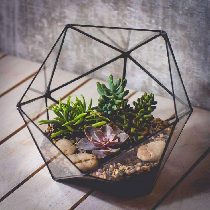 5 причин, почему флорариум — это идеальный подарок