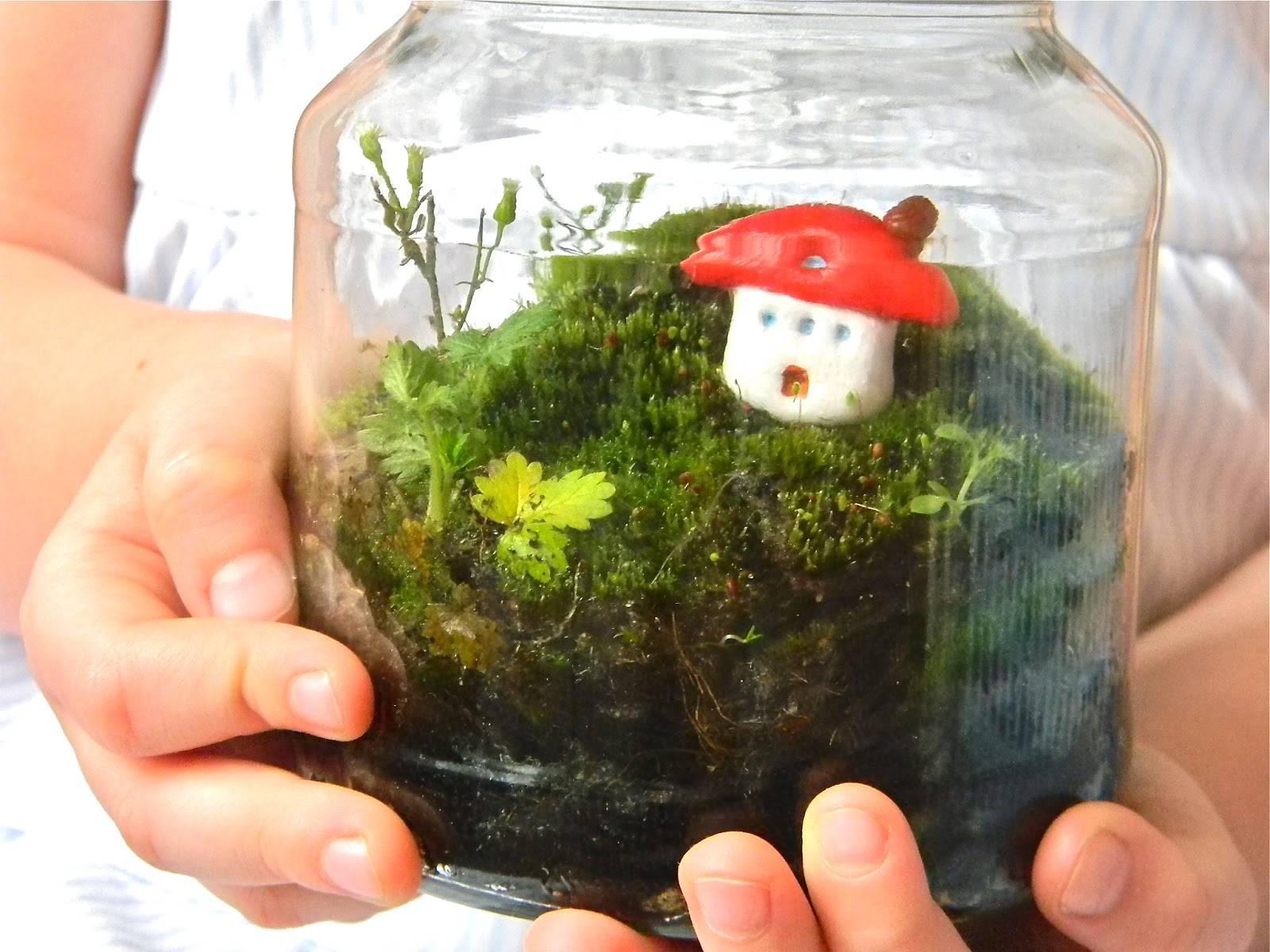 Как вырастить мох в домашних условиях