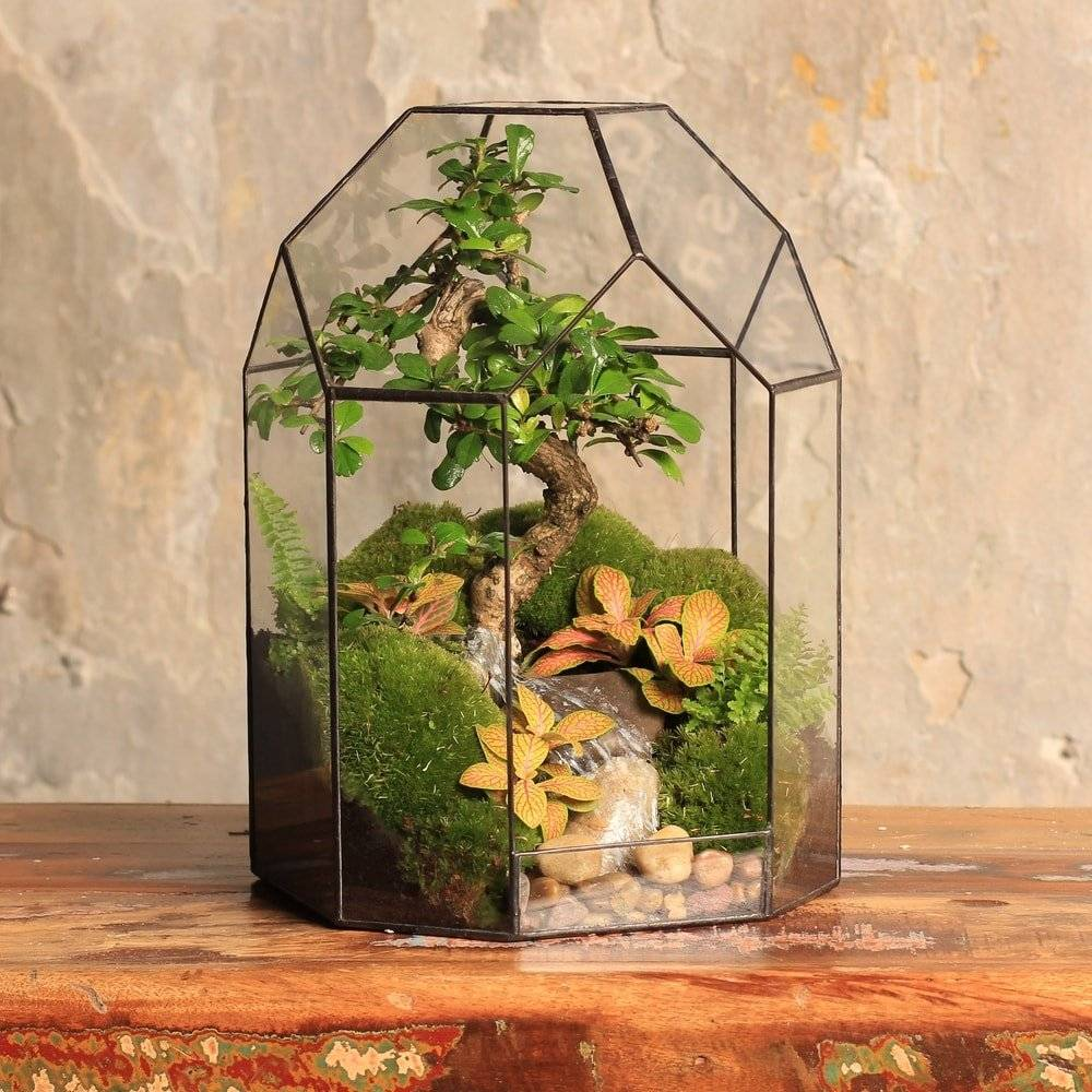 Флорариум своими руками и что в нем можно посадить для начинающих: создание открытой и закрытой оранжереи, подходящие растения и их посадка