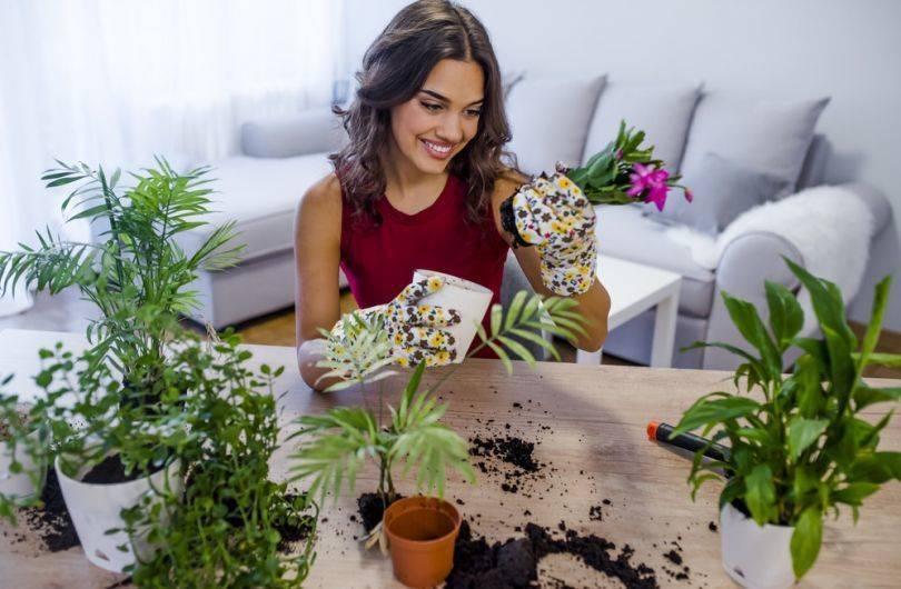 Комнатное цветоводство   разведение комнатных растений