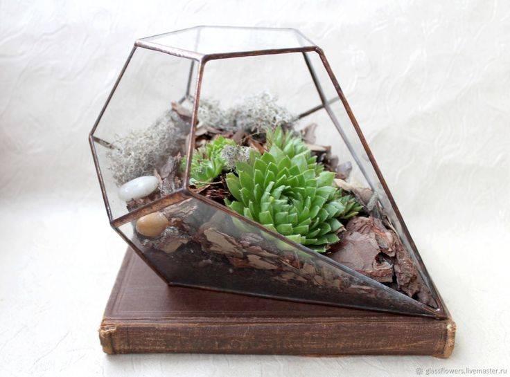 Флорариум для кактусов и суккулентов. как хобби и увлечение