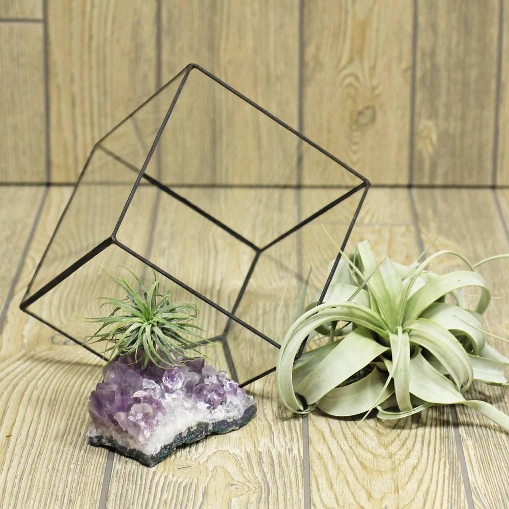 Топ-100 идеи для флорариума +пошаговая инструкция
