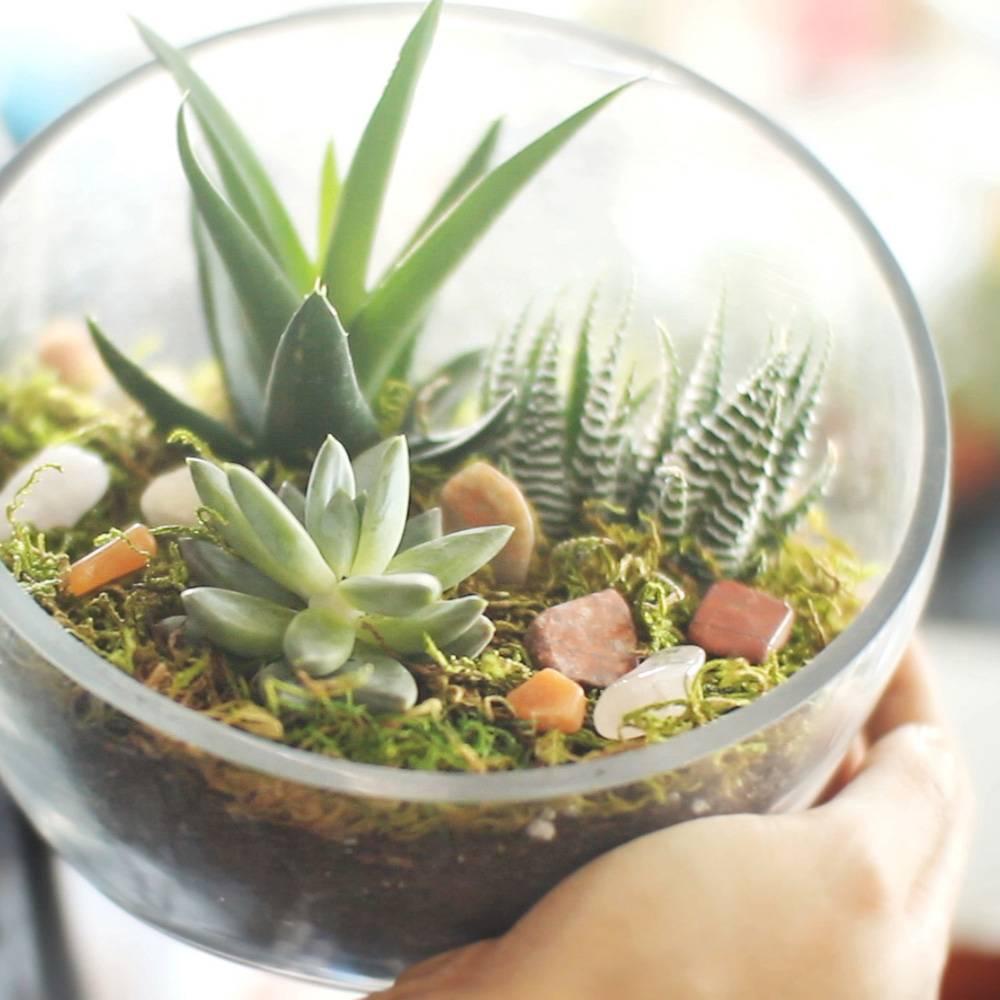 Как сделать флорариум с суккулентами своими руками?