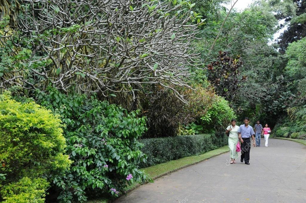Королевский ботанический сад (royal botanical gardens). перадения, канди