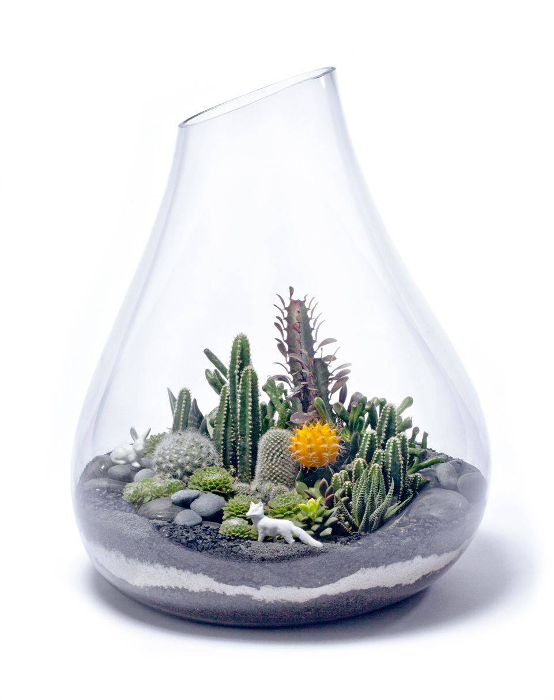Выбираем растения для флорариума. какие растения посадить в террариуме? список, фото — ботаничка.ru