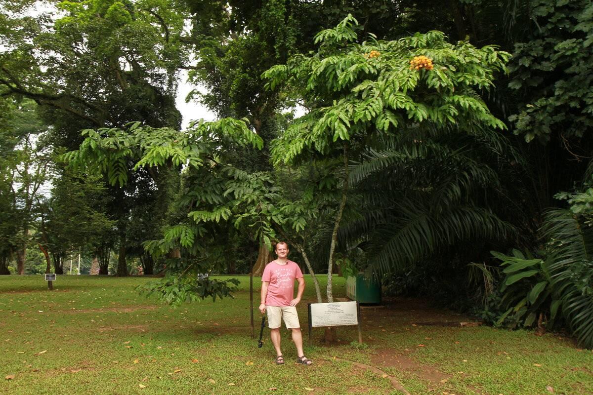 Королевский ботанический сад канди перадения, шри-ланка