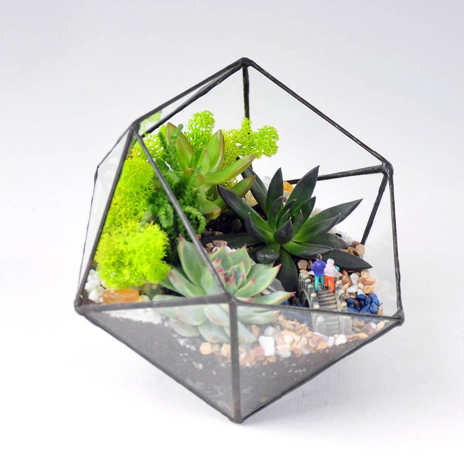 Как сделать флорариум своими руками для начинающих, и что для этого нужно: выбор растений и декоративных камней, оригинальные идеи необычных флорариумов с пошаговой инструкцией | qulady